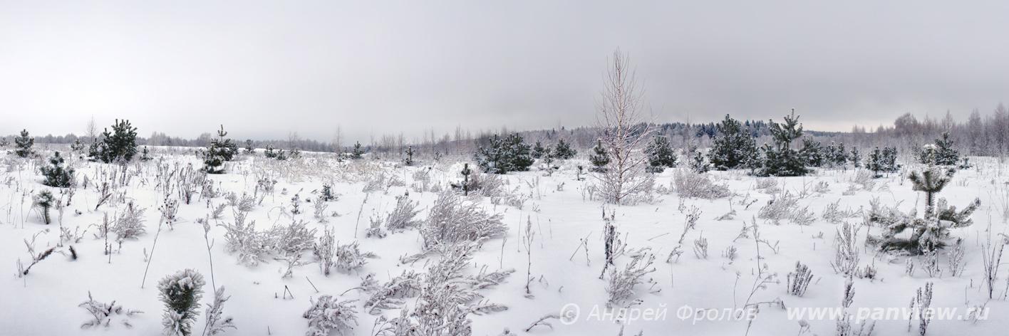 Зимее поле