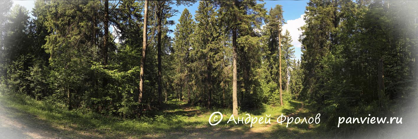 Лес в Гришкино под Тверью